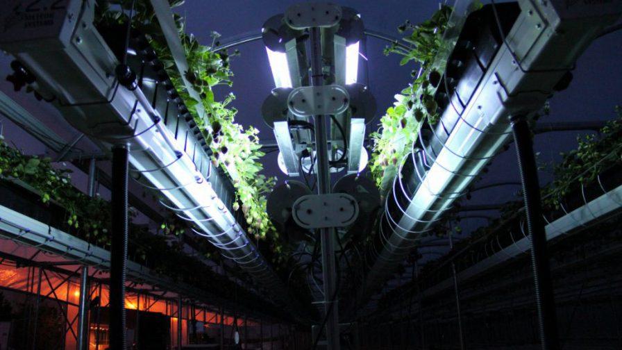 https://landbouwzonderchemiehoedan.nl/files/visuals/_newsSmall/Kas_Lumion_uv_lamp_robot_aardbei_1024_617_84_c1.jpg